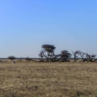 Wide open lands