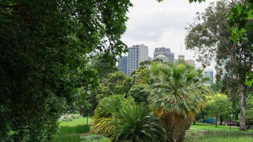 City Behind Trees