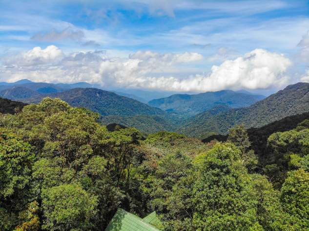 Cameron_Highlands_0001