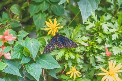 Cameron_Highlands_03248