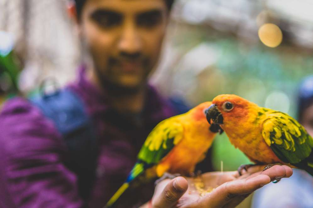 KL Tower Mini Zoo Bird Feeding