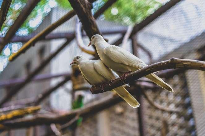 KL Tower Mini Zoo Birds