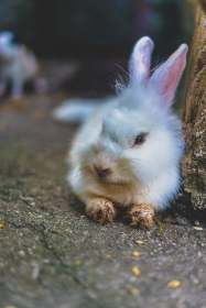 KL Tower Mini Zoo Rabbit